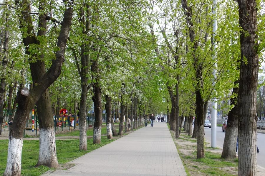 Фото весеннего краснодара
