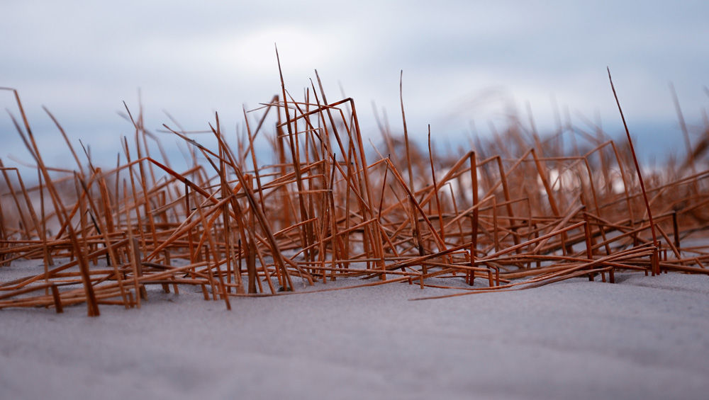 Трава на осеннем пляже