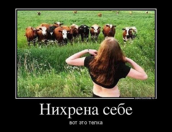 521755_nihrena-sebe_demotivators_ru