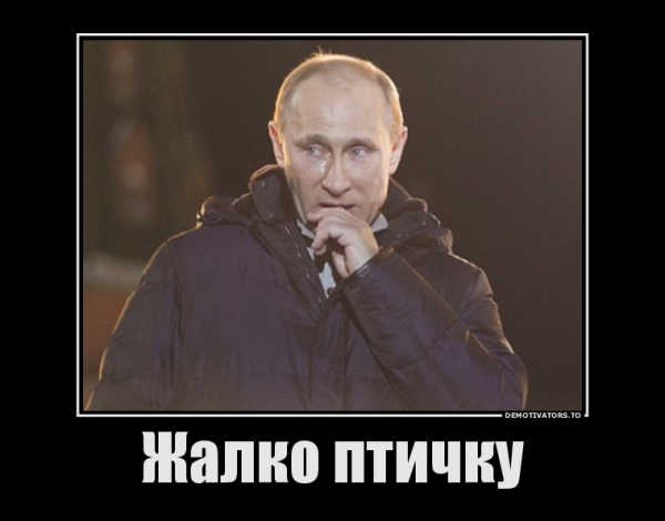 148653_zhalko-ptichku_demotivators_ru