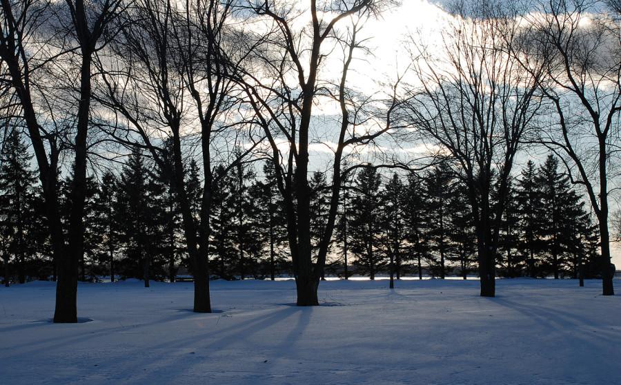 arboretum at winter sleep 02