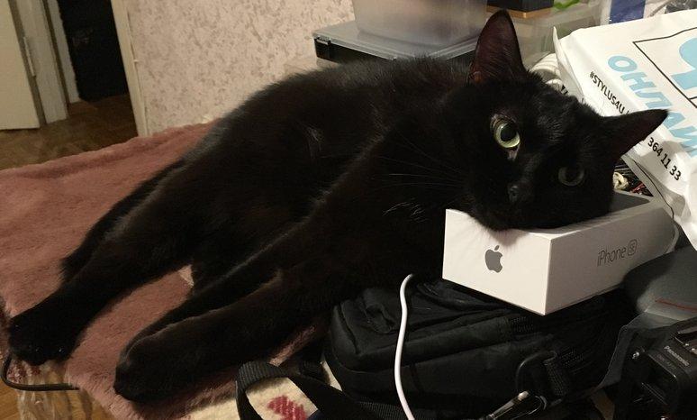 Seelia and iPhone