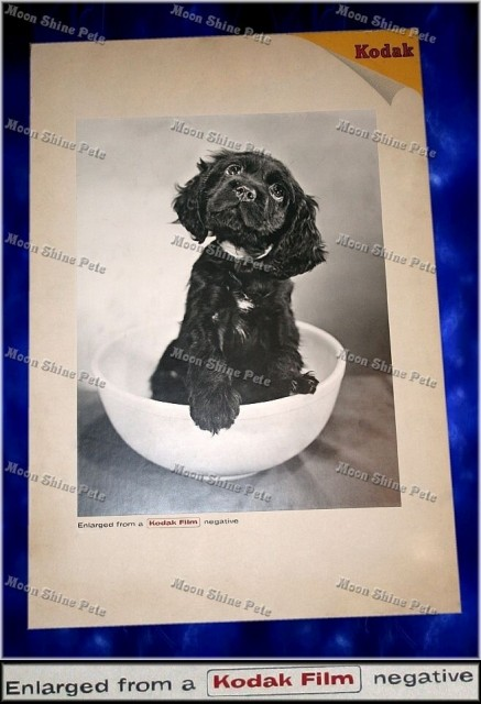Kodak dog film enlargement advertisement