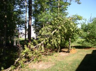 storm 1, tree 0