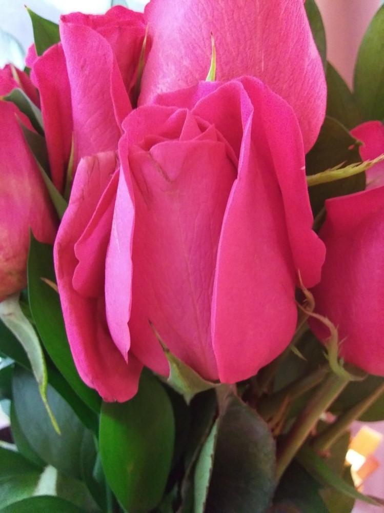 my flowers 4.jpg