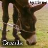 27-Drucilla.jpg