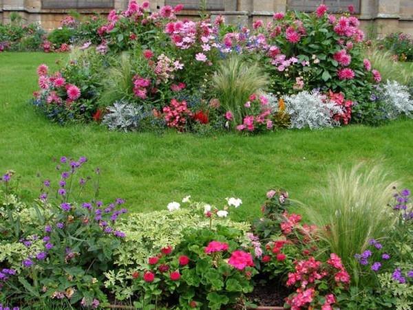 растения в миксбордере