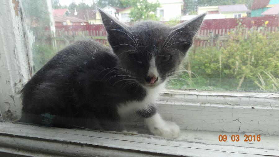 котенок пока фото