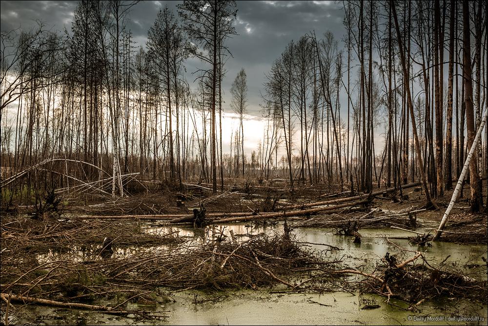 10_dead_wood-19