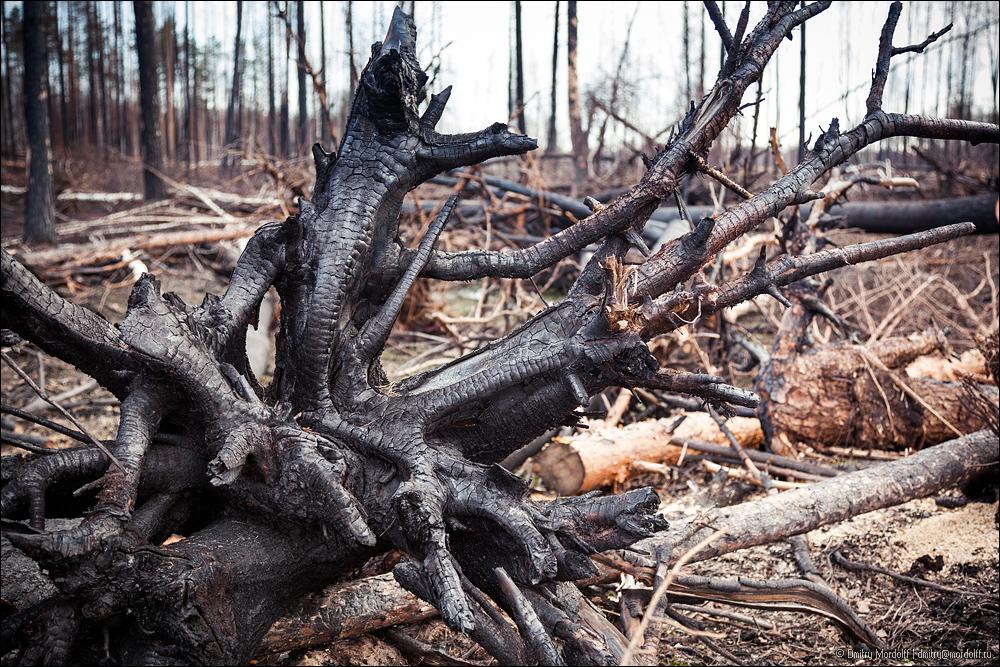 18_dead_wood-5