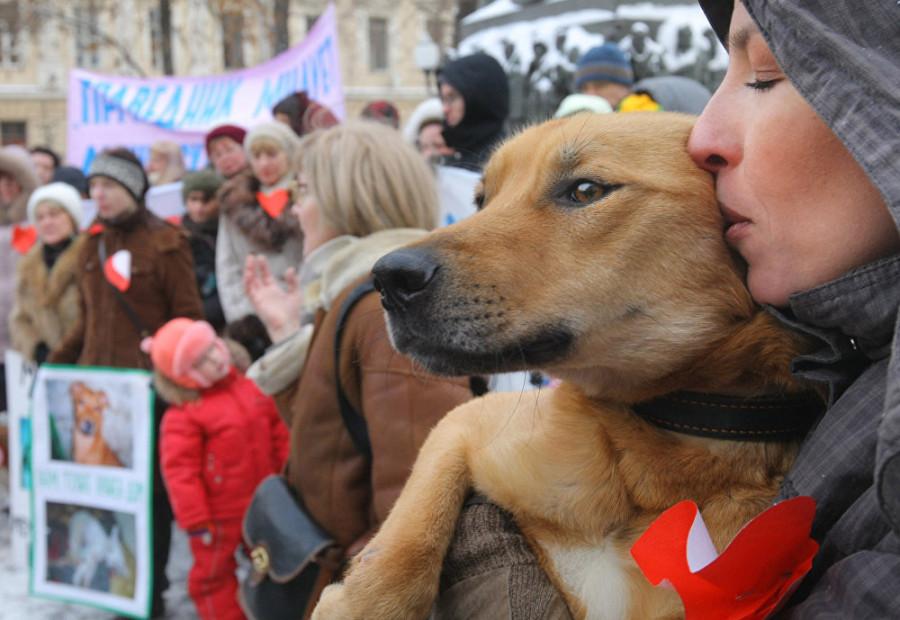Муж, собака и права животных