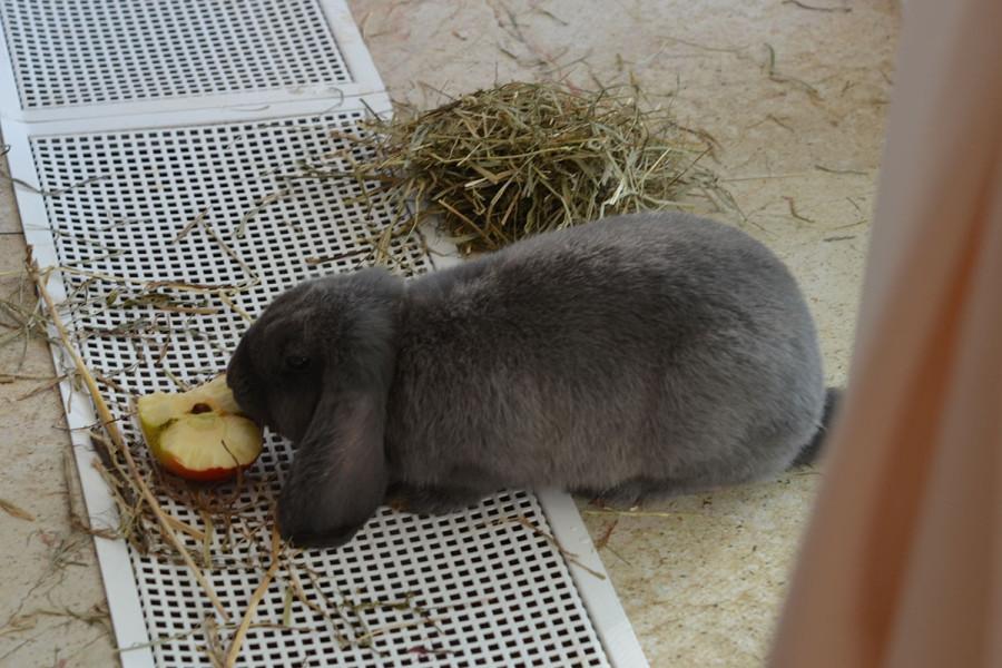 26_кролик_ест