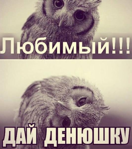 совушка