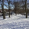 Snow-covered park