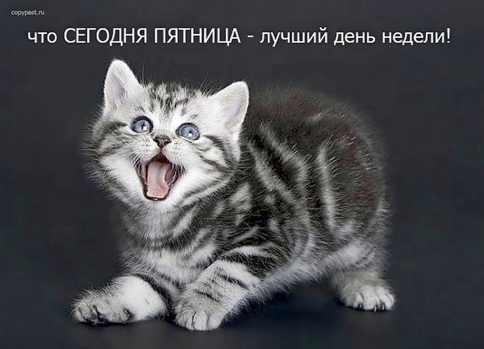 Открытки пятница котенок