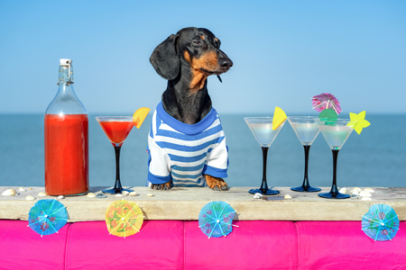118904261-funny-cool-dachshund-dog-drinking-cocktails-at-the-bar-in-a-beach-club-party-with-ocean-view.jpg