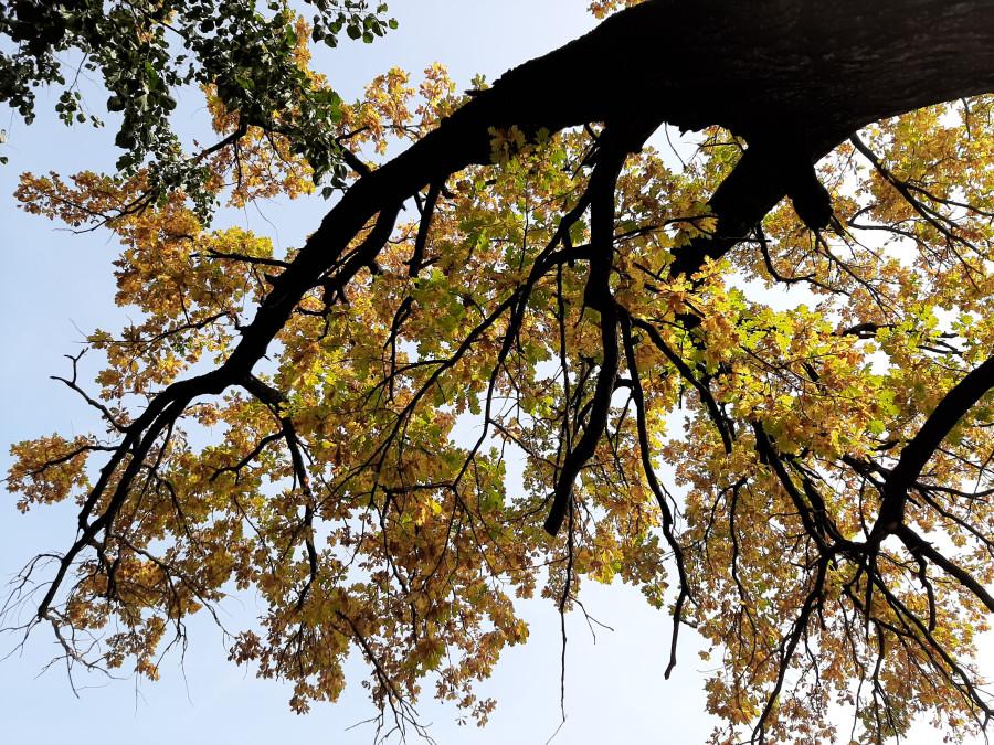 Шестьдесят оттенков желтого. Новости природы в золотую осень 20200925_123855.jpg