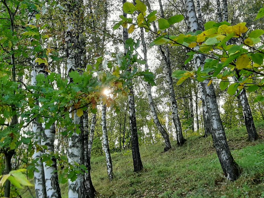 Шестьдесят оттенков желтого. Новости природы в золотую осень 20200926_144305f.jpg