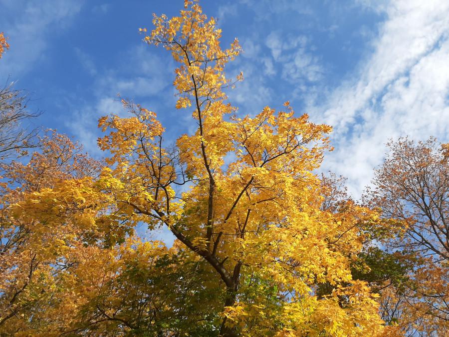 Шестьдесят оттенков желтого. Новости природы в золотую осень 20200930_142706.jpg