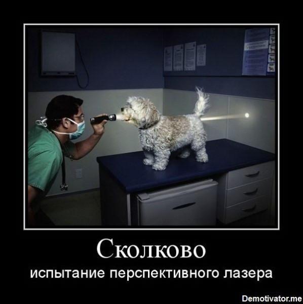 Demotivatory-Skolkovo-44.jpg
