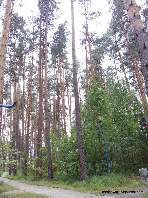 Озеро Белое Шатурский район (58).jpg