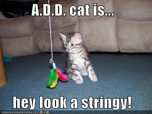 ADD-cat