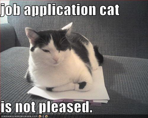 cat cv