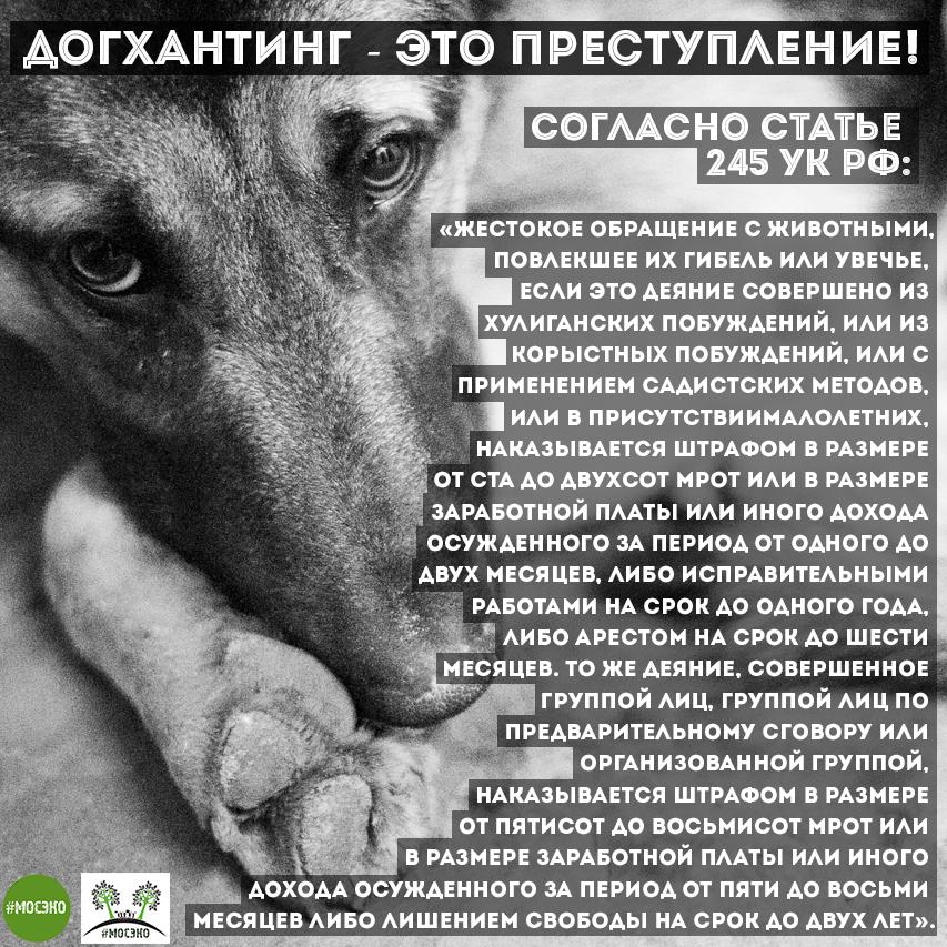Doghunters_UK_sq_logo