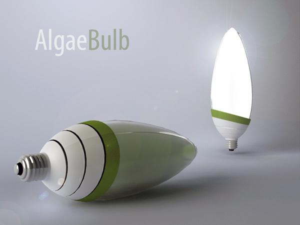 algae_01