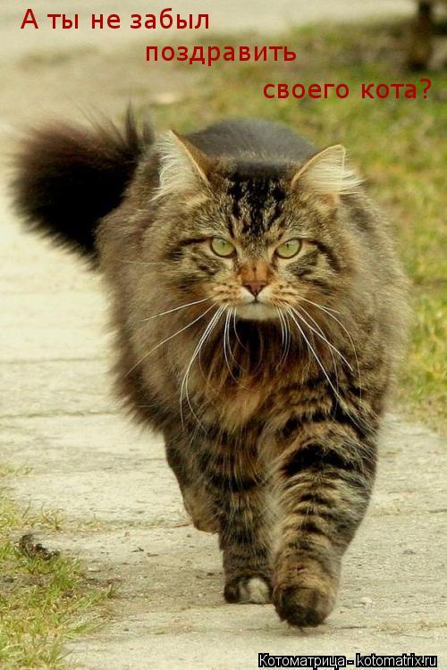 Когда отмечается всемирный день котов
