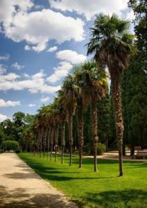 Мисхорский парк пальмы