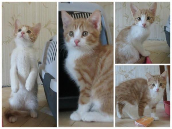 Кошка сильно похудела за месяц
