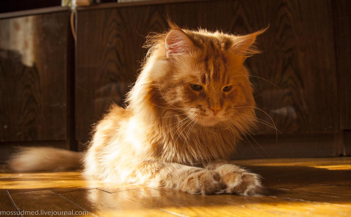 кот ловит солнечный зайчик