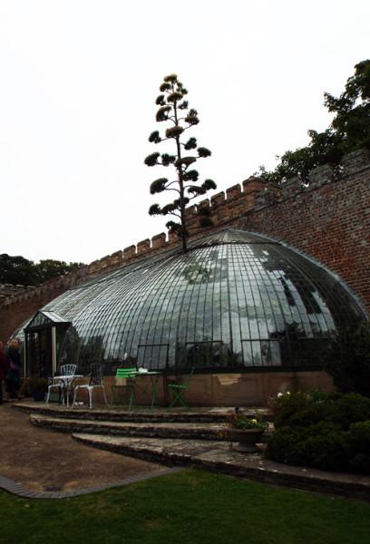 7. century plant