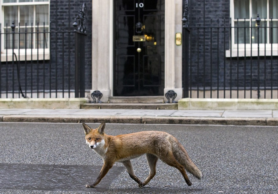 fox-downing-street
