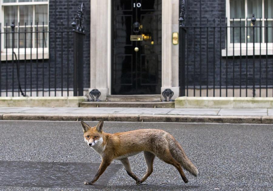 fox-downing-street