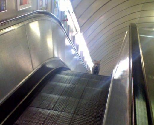 london-tube-fox
