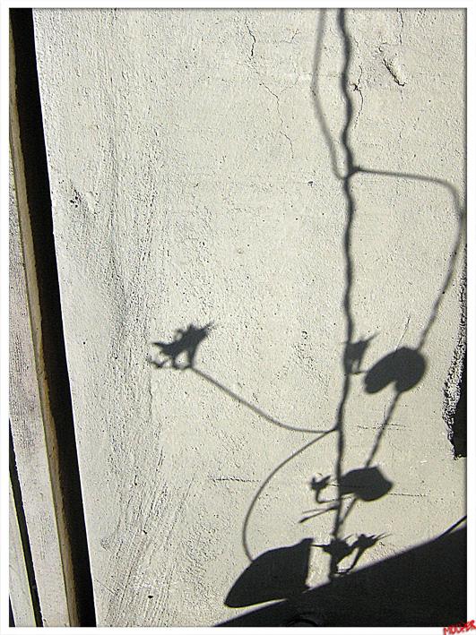 тень цветка падающая на воду картинки такие были