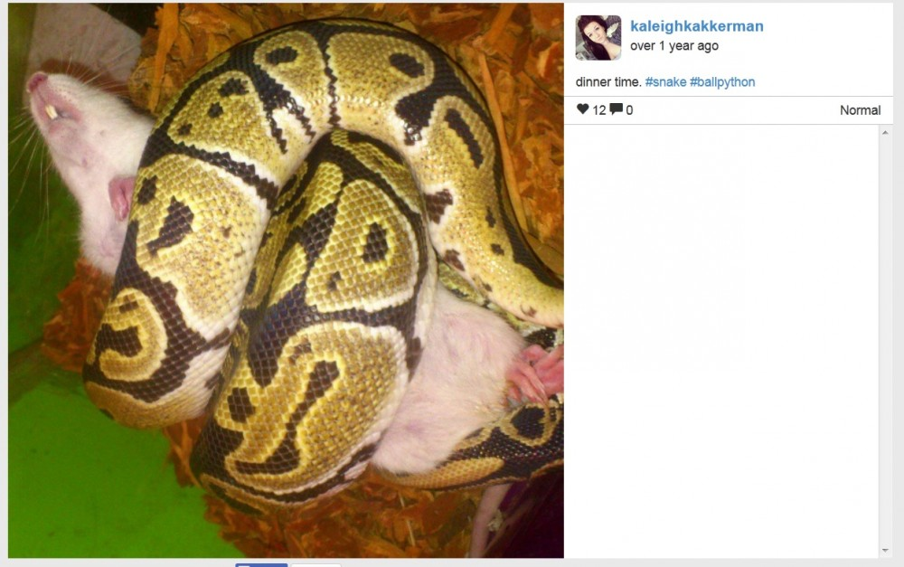 Kaleigh Akkerman Oshawa Snake Owner With Rat Ads July-Aug 2014_001