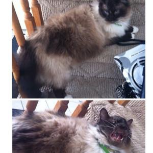 Kaleigh Akkerman Animal Hoarder Cat-3