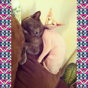 Kaleigh Akkerman Animal Hoarder Cats
