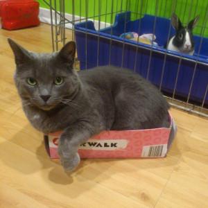 Kaleigh Akkerman Animal Hoarder Cat&Rabbit