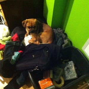 Kaleigh Akkerman Animal Hoarder Dog