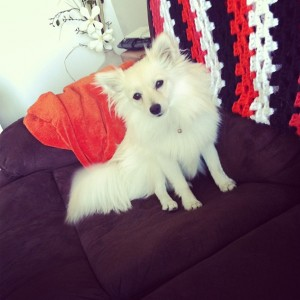 Kaleigh Akkerman Animal Hoarder Dog-4