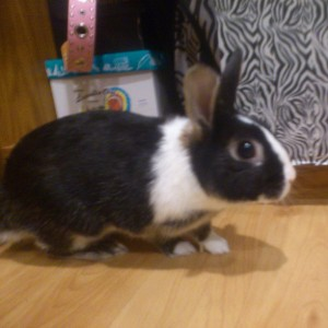 Kaleigh Akkerman Animal Hoarder Rabbit