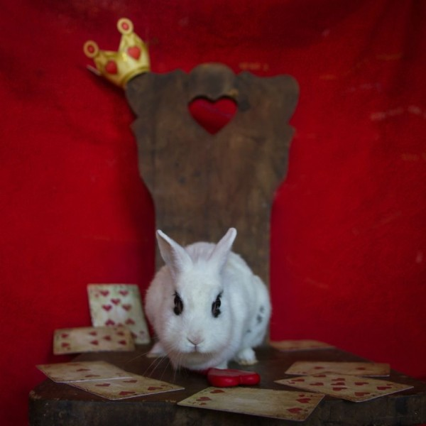 From-labs-to-Wonderland-dozens-of-rescued-animals-became-magic-models-in-Alice-style7__880