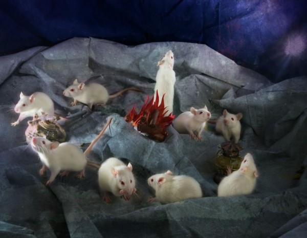 From-labs-to-Wonderland-dozens-of-rescued-animals-became-magic-models-in-Alice-style2__880