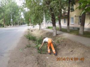 Поросли ул.Фасадная