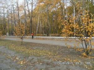 Стара-Загора сбор листвы