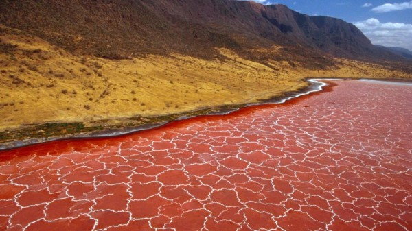 Необычное озеро Натрон